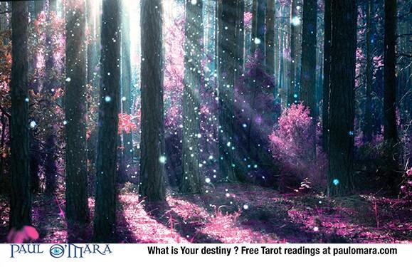 Harvest Moon - Fantasy & Illusion